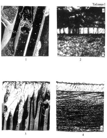 У двошарових черепашок призматична структура простежується лише у зовнішньому шарі й представлена тільки правильними призмами